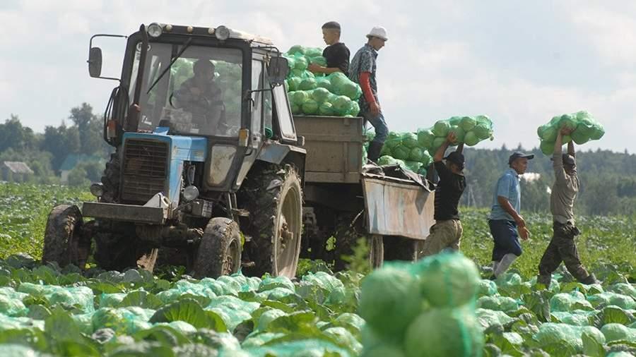 Минсельхоз: овощи могут подешеветь на20% заближайшие три года