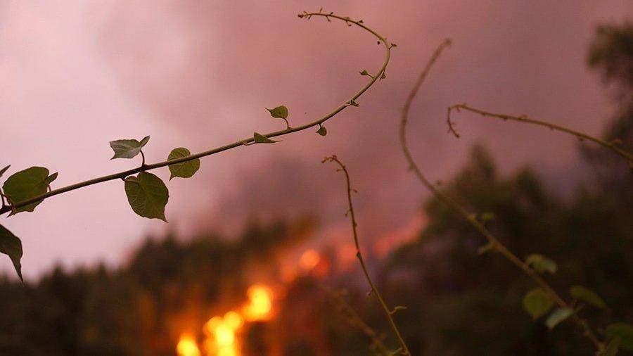 ВЗабайкалье из-за жары илесных пожаров объявлен режимЧС