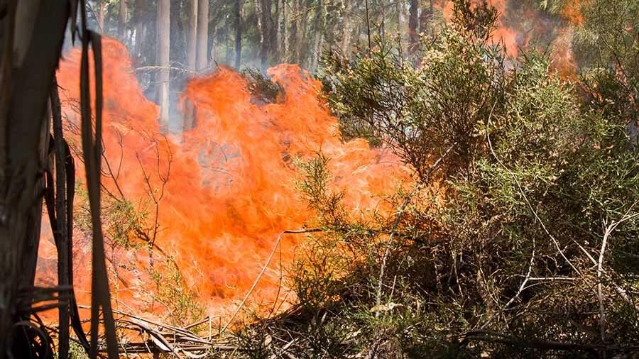 Вчетверг в РФ бушевало практически 50 лесных пожаров
